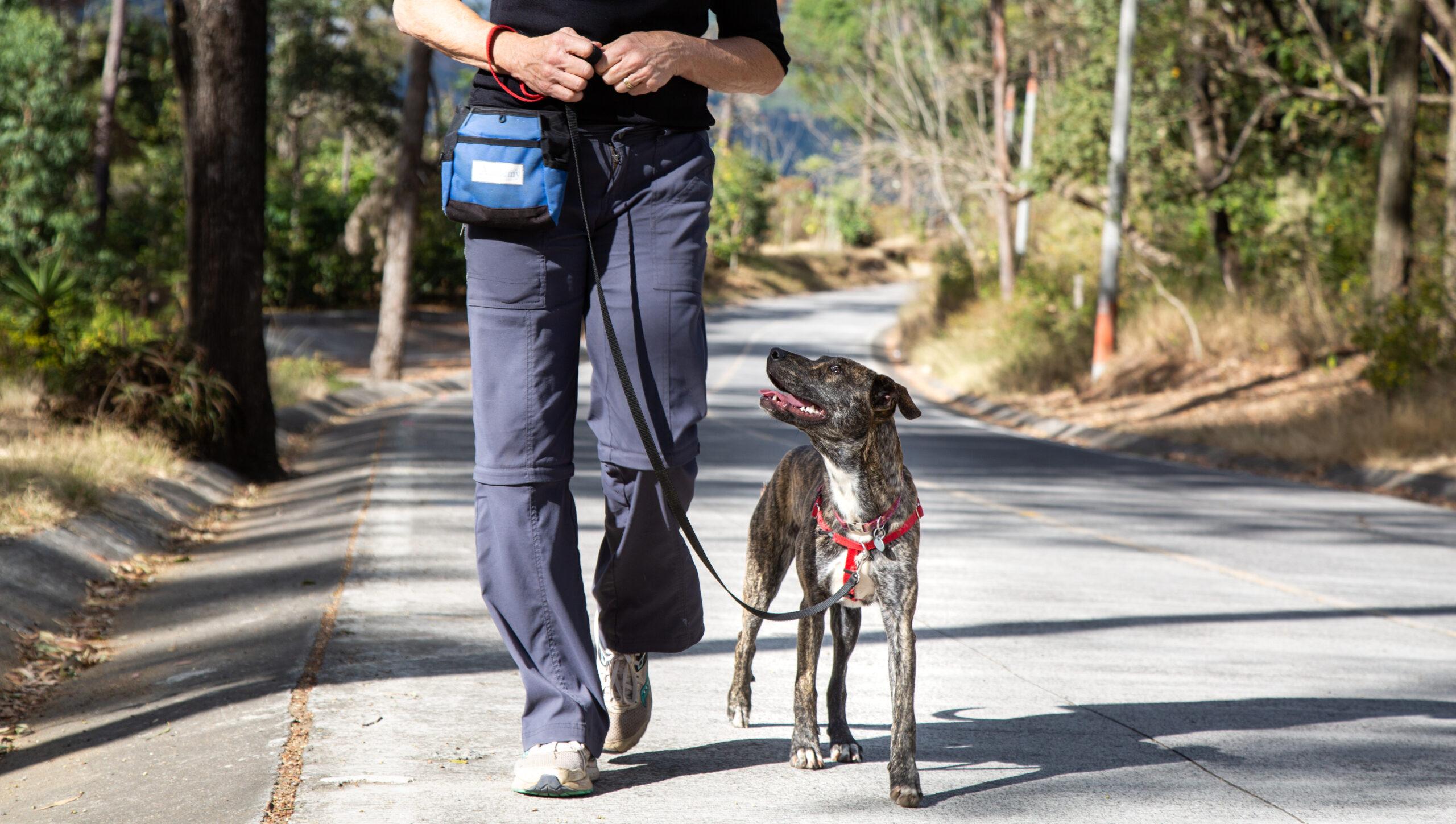 Linda walking a dog on a loose leash.